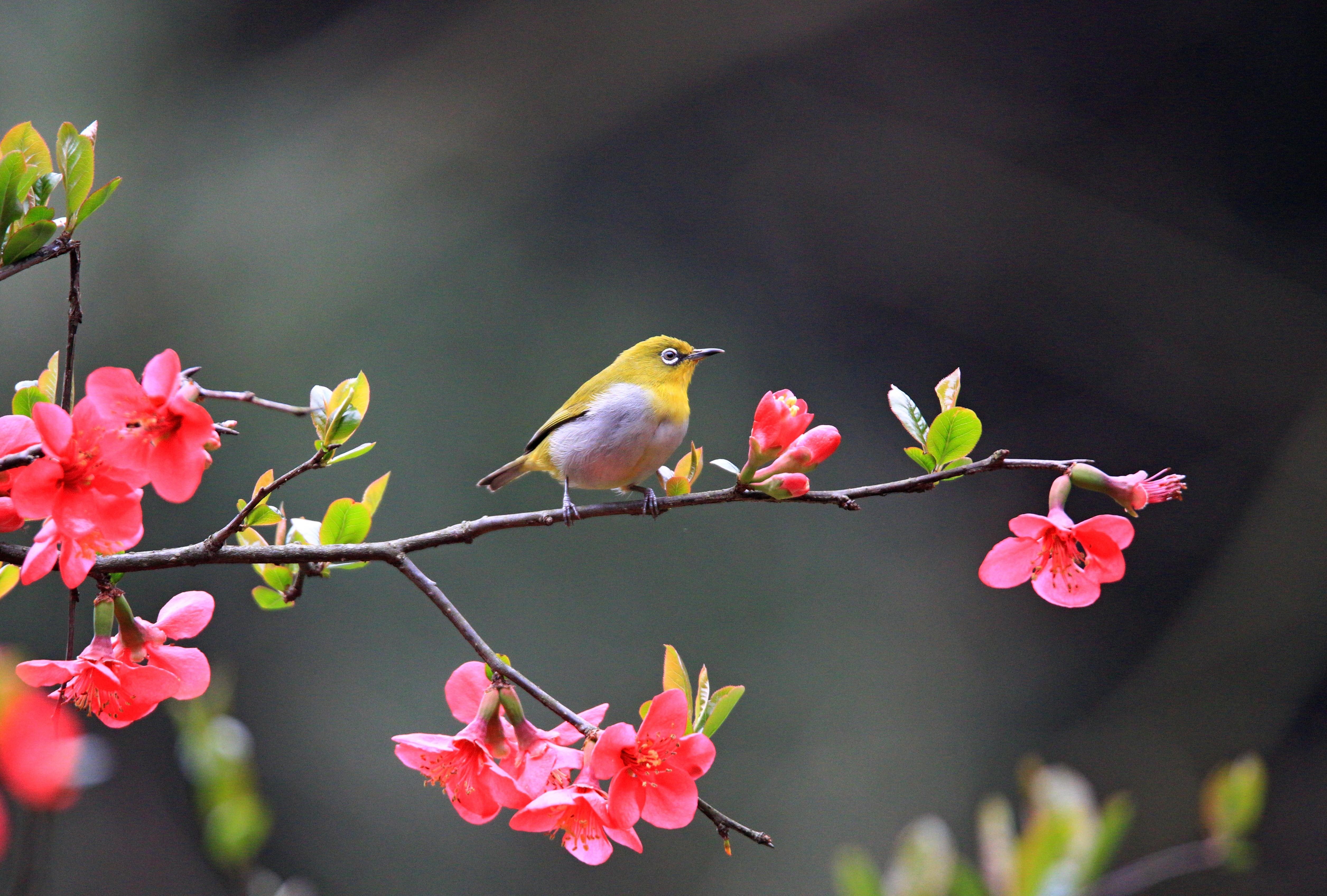 段智慧《春》 Canon.jpg