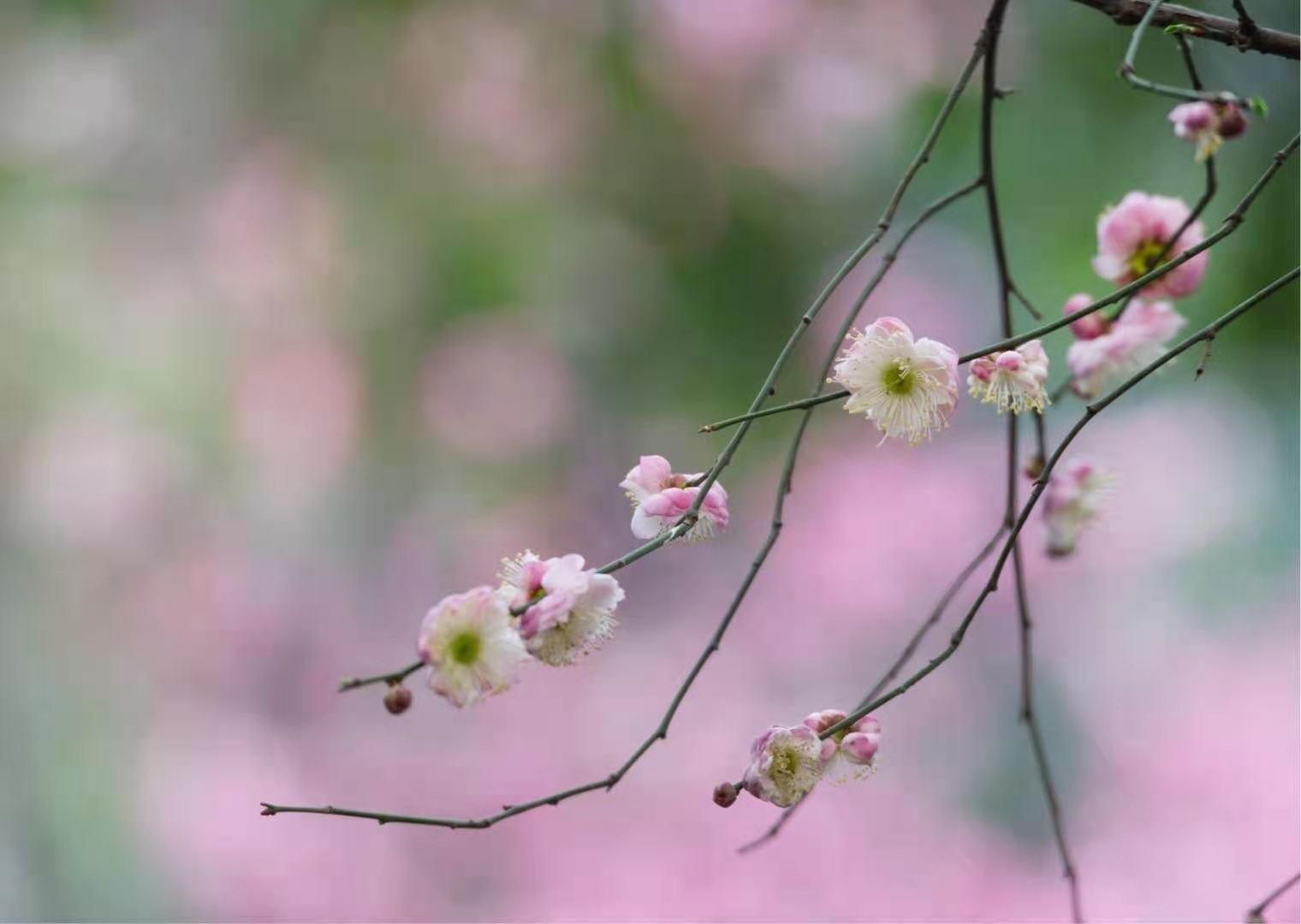 顺子 《冬去春来三月花》 未知.jpg