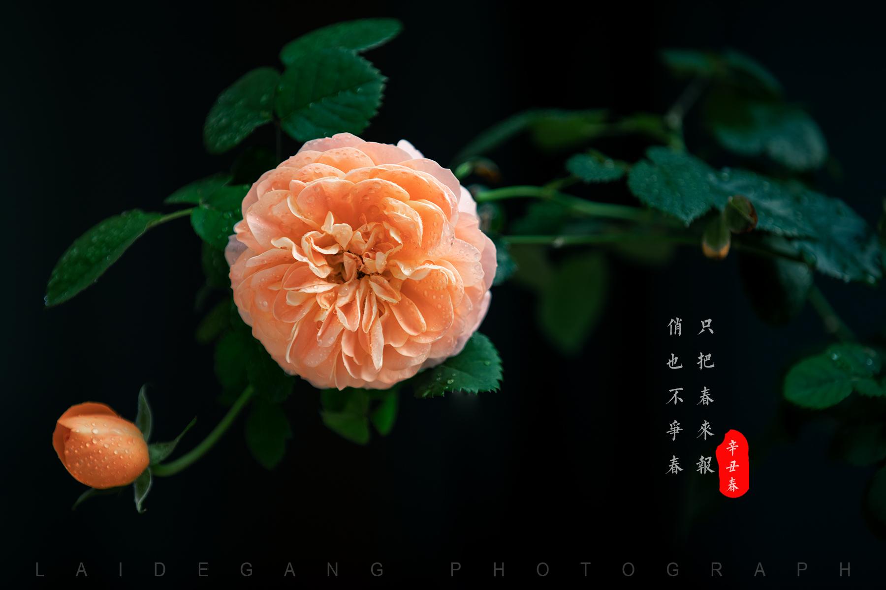 赖刚 《绽放》 Canon.jpg