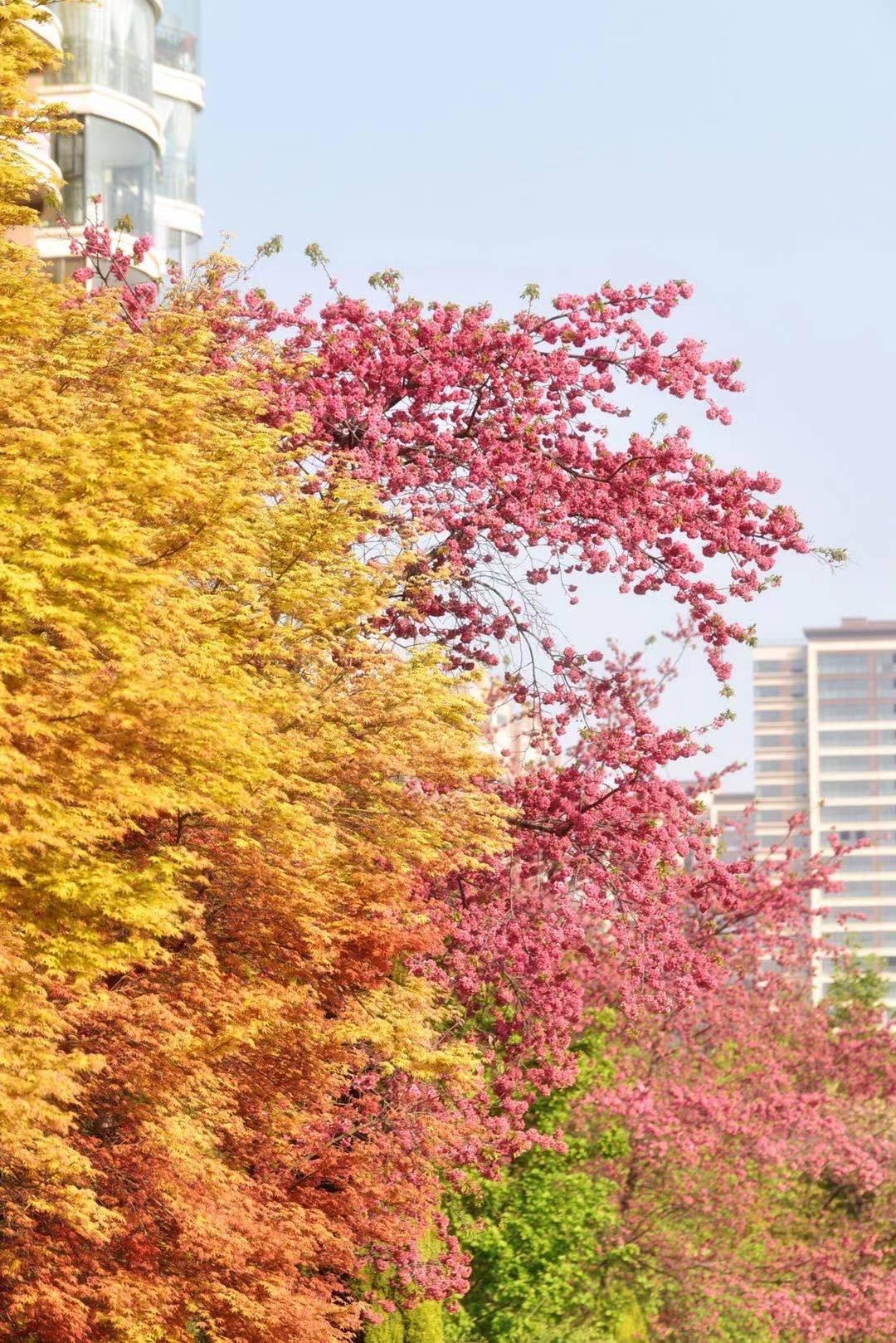 沙荣发 《春色撩人》 Nikon.jpg