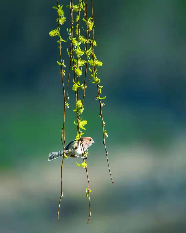 老k 《春天来了》 Nikon.jpg