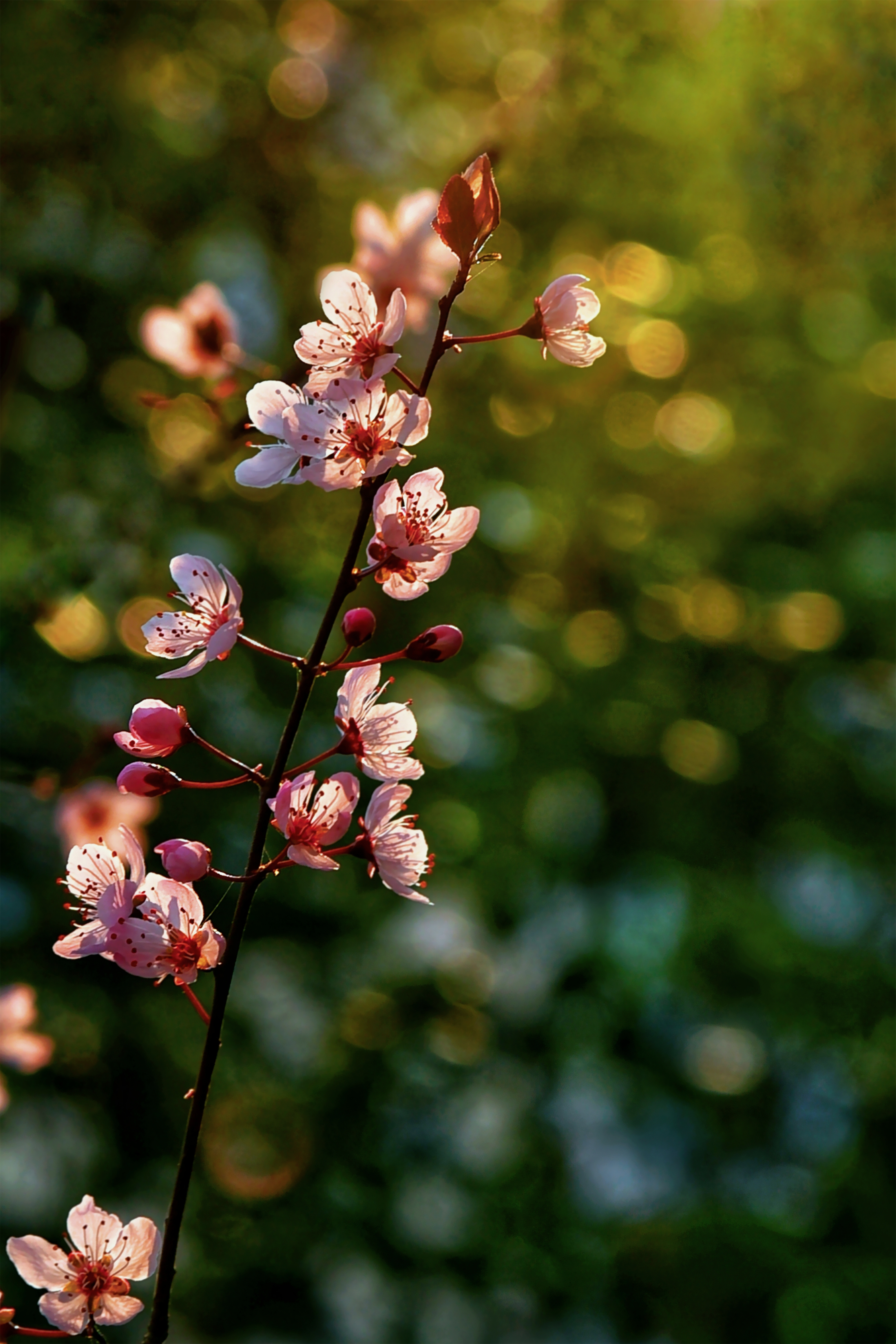 湖南常德-湘情 《春暖花开》 Nikon.jpg